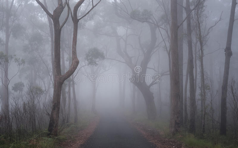 Misty forest stock image