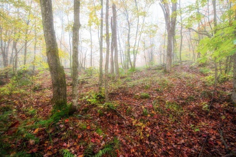 Misty Forest em Autumn Morning imagens de stock
