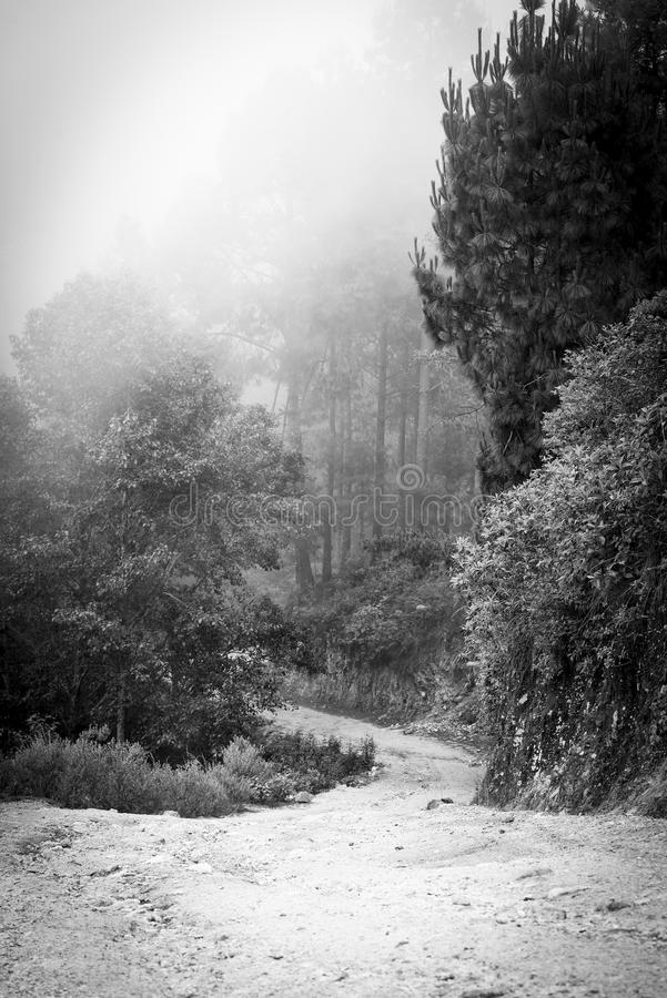 Misty Forest Guatemala Black and White. Misty forest landscape with fog through the trees in Guatemala in black and white royalty free stock images