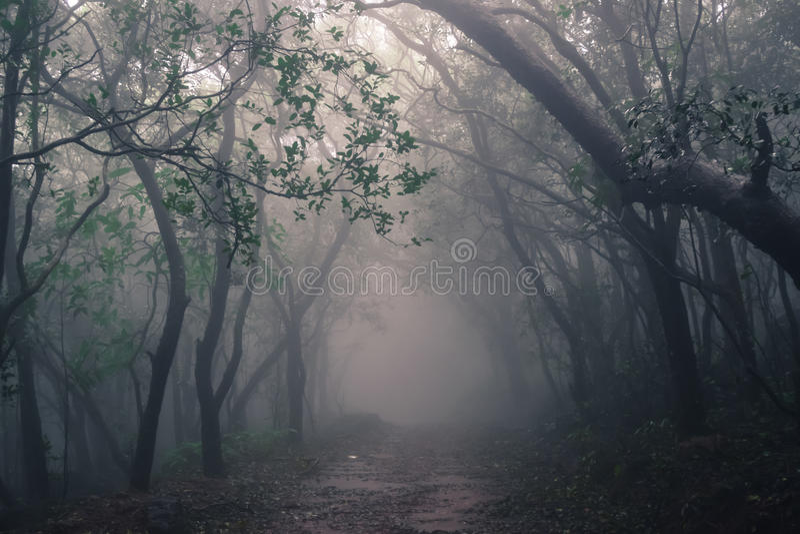 Misty forest of Matheran Hill station. Nestled in Sahyadri range of western ghat near Mumbai Maharashtra stock photos