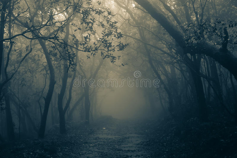 Misty forest of Matheran. Matheran hill station during rainy monsoon season royalty free stock photo