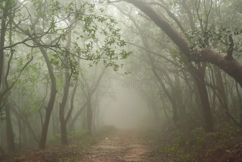 Misty forest of Matheran Hill station during rainy monsoon season. Matheran is a hill station nestled in Sahyadri range of western ghat near mumbai in Raigad royalty free stock photos
