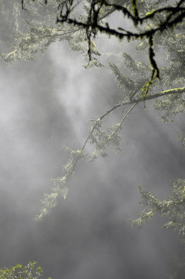 Misty Forest Mossy Branches stock photos