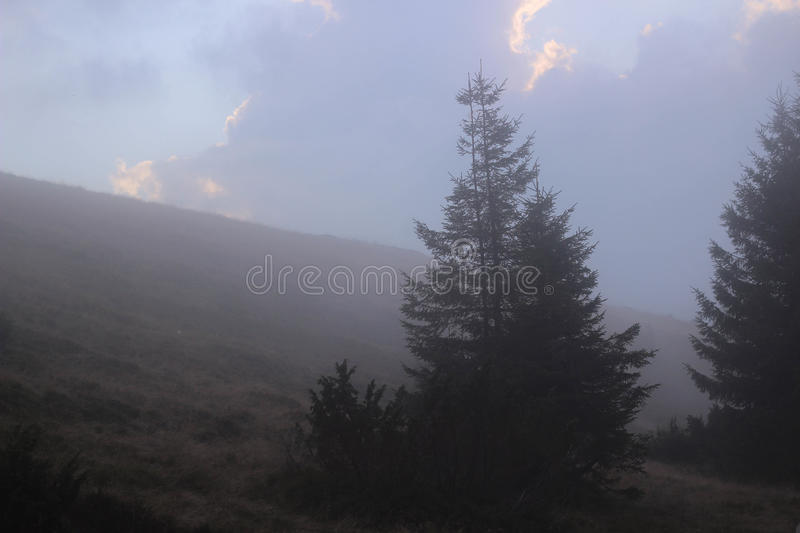 Misty forest royalty free stock photo