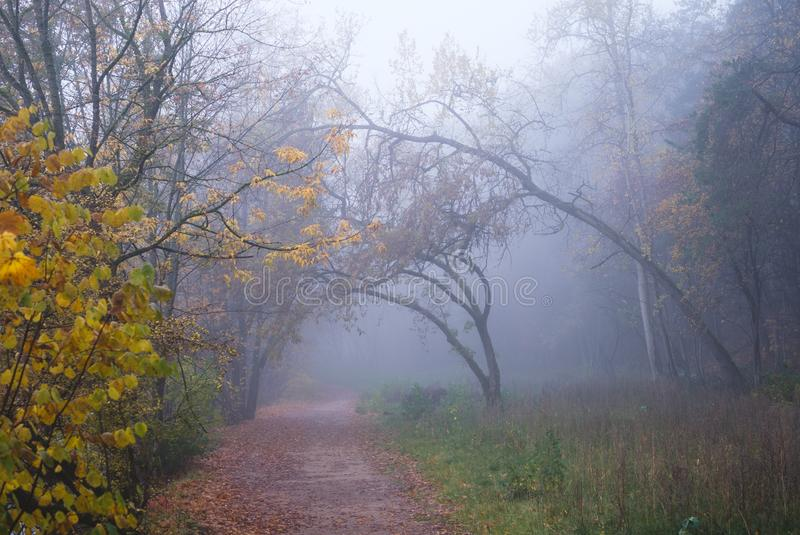 Misty forest path on a foggy autumn morning stock images