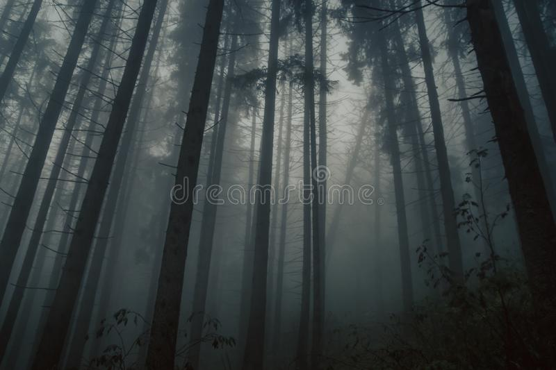 Misty forest in a scary, mystical mood in Tatra mountains, Poland royalty free stock photography