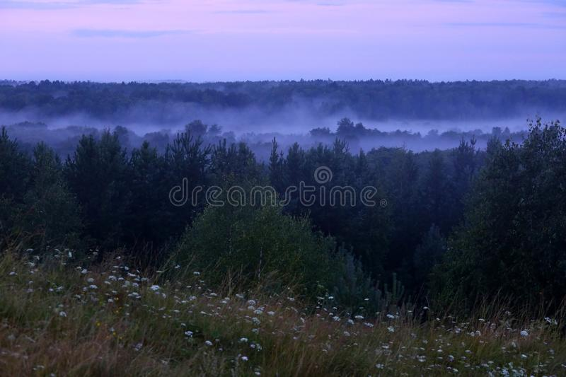 Mist after the rain. Misty forest after summer rain royalty free stock images