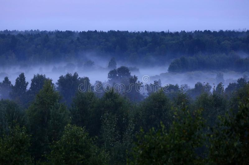 Mist after the rain. Misty forest after summer rain stock photo