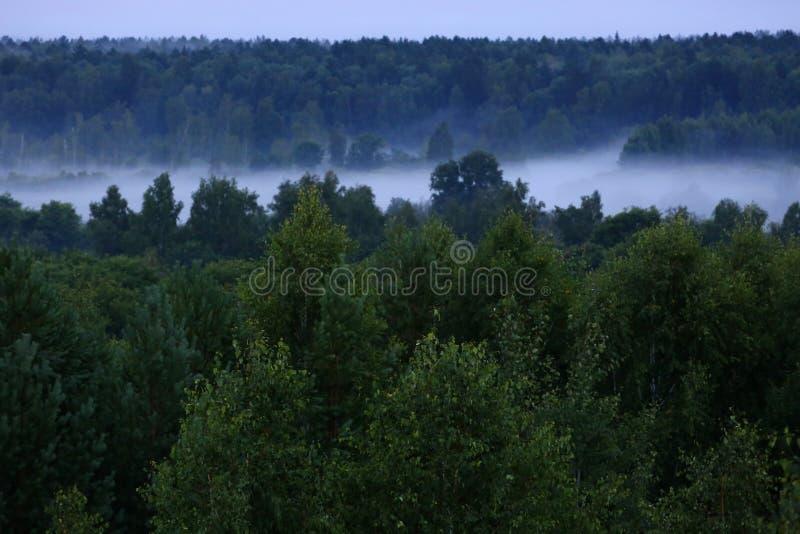 Mist after the rain. Misty forest after summer rain stock photos