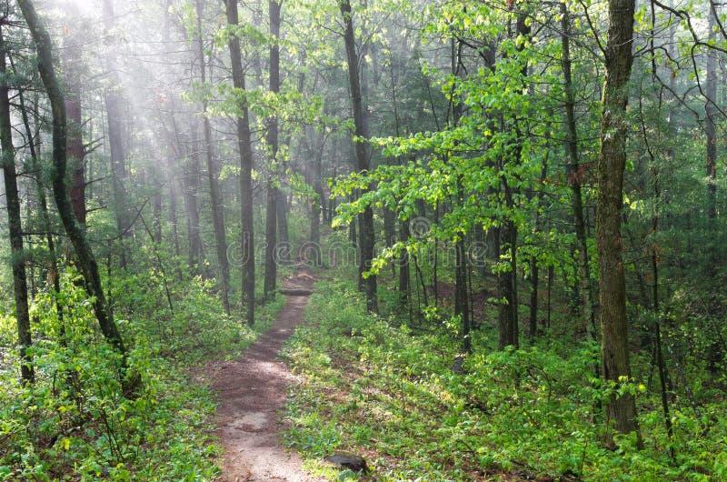 Misty Forest Trail al monticello del castello fotografie stock