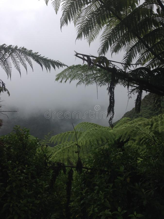 Free Misty Forest View Royalty Free Stock Image - 114057016