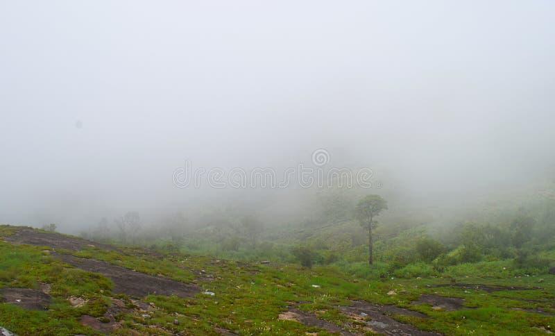Misty Green Hills - Peerumedu, Idukki-Bezirk, Kerala, Indien - natürlicher Hintergrund lizenzfreies stockbild