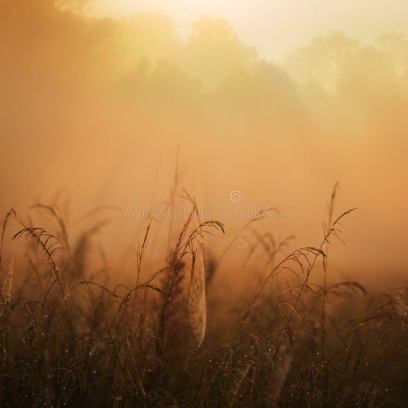 Misty jungle sunrise royalty free stock image