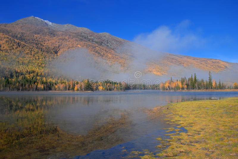 Download Misty lake stock image. Image of water, nature, forest - 11744541