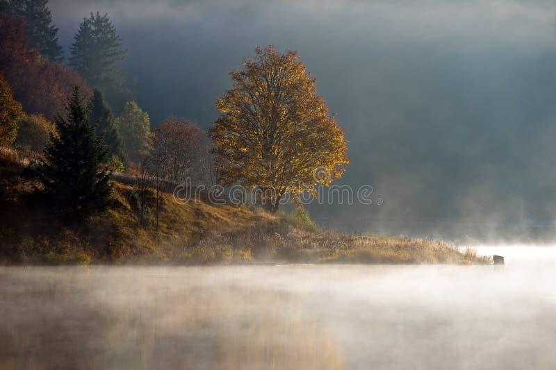 Download Misty lake stock image. Image of tranquil, haze, morning - 6723893