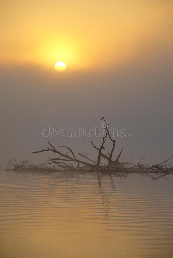 Free Misty Lake At Sunrise Royalty Free Stock Images - 39813889