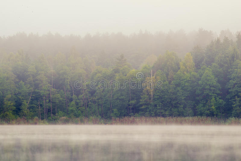 Misty lake and forest stock image