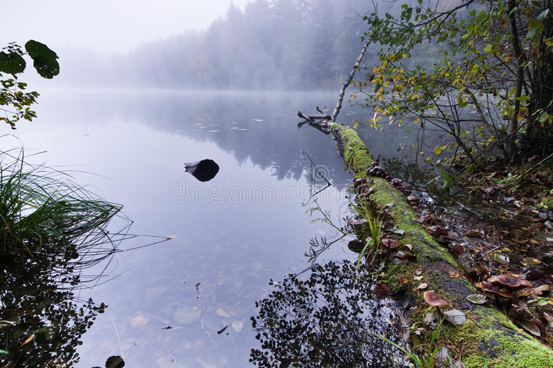 Misty lake morning. Misty morning by the lake in forest stock photo