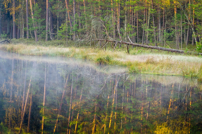 Misty lake in the woods royalty free stock image
