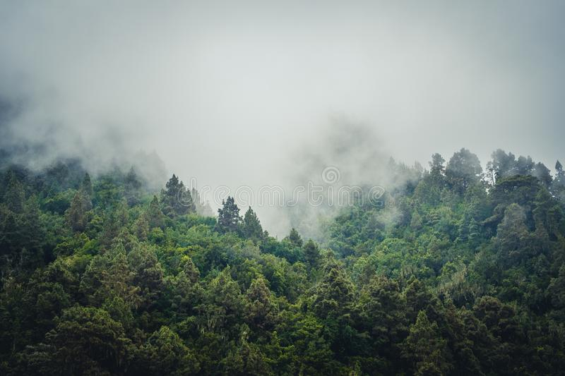 Misty landscape with fir forest in hipster vintage retro style stock photos