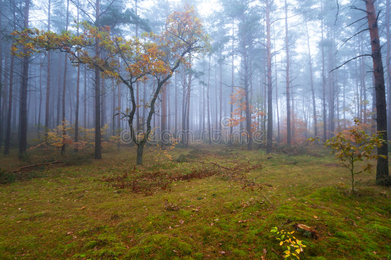 Download Misty Landscape In The Forest Stock Photo - Image: 27272822