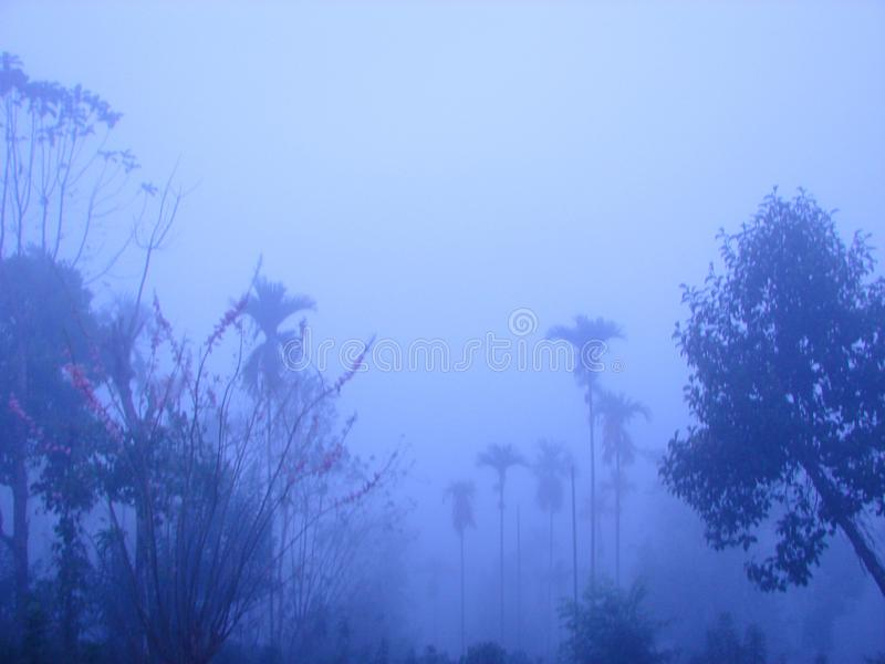Misty Landscape - Forest of Palm Trees and other Trees in Early Morning. This is a photograph of a valley with forest of palm trees and other trees, captured in royalty free stock photo