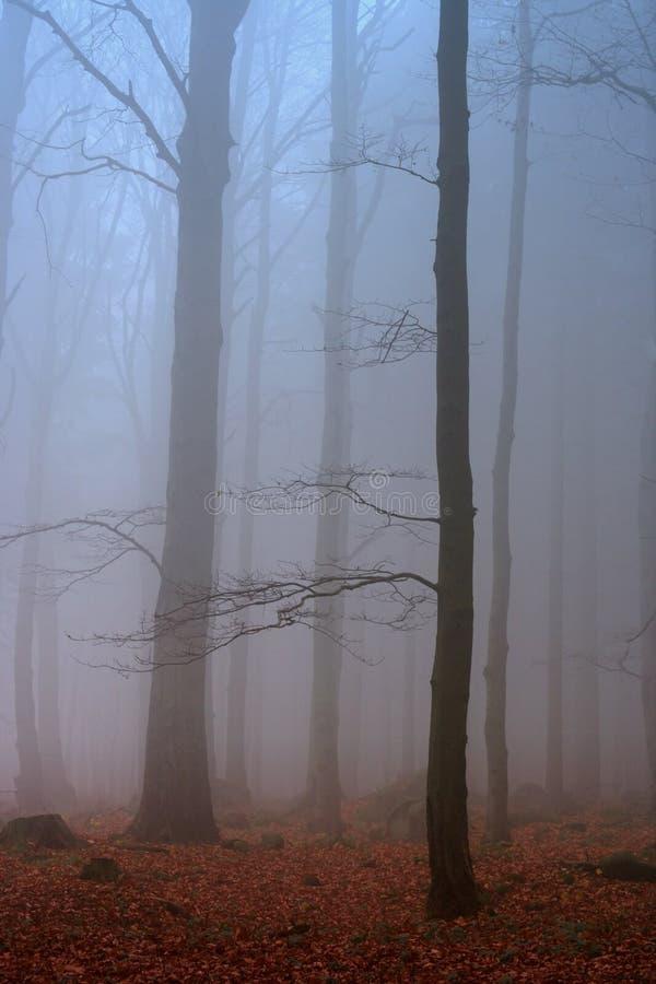 misty lasu. obraz royalty free