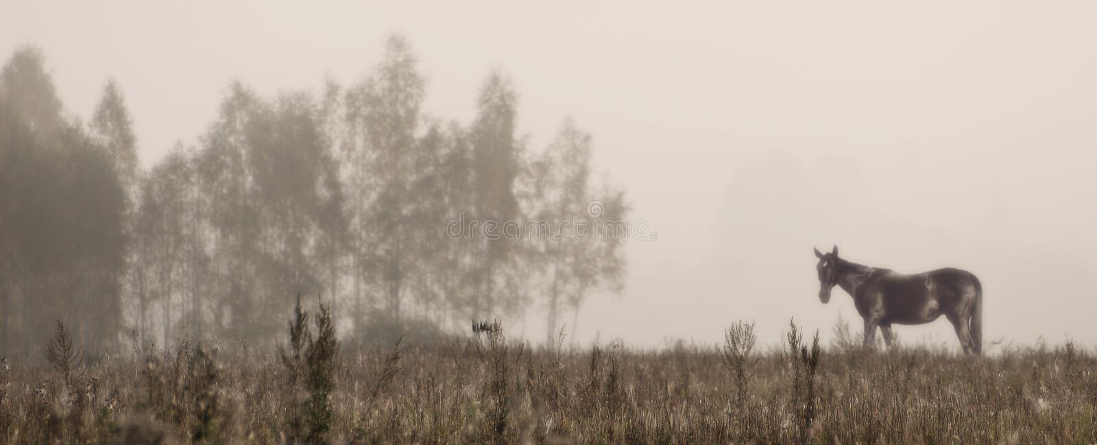 Download Misty morning. stock image. Image of panoramic, yellow - 2543273