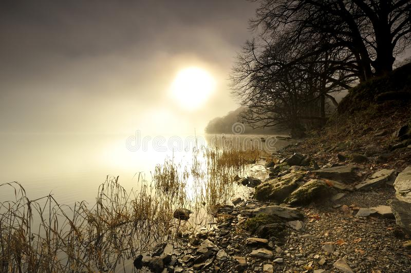 Download Misty Morning stock image. Image of pond, shore, fallen - 28146119