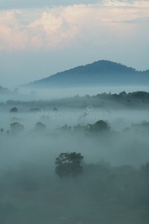 Misty morning. Found in the raining season in Thailand royalty free stock photography