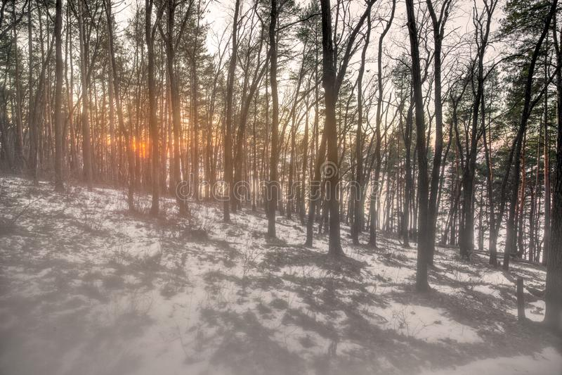 Misty morning in the autumn forest. The sun`s rays weakly pierce dense fog. First snown royalty free stock photo
