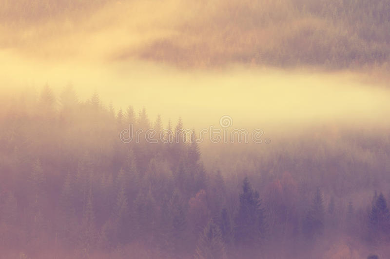 Misty morning. Beautiful misty morning in the mountains royalty free stock image