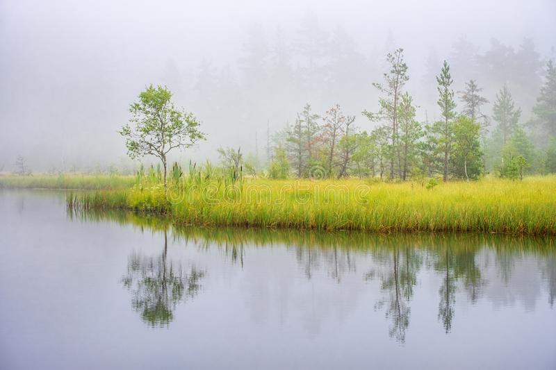 Misty morning at a bog lake with water reflections royalty free stock images
