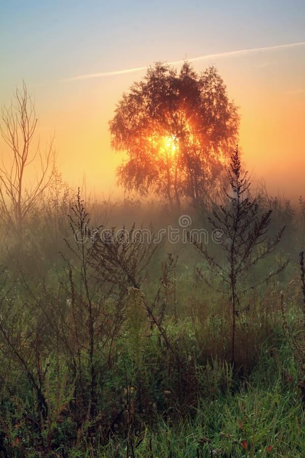 Download Misty morning on the field stock image. Image of ethereal - 22341915