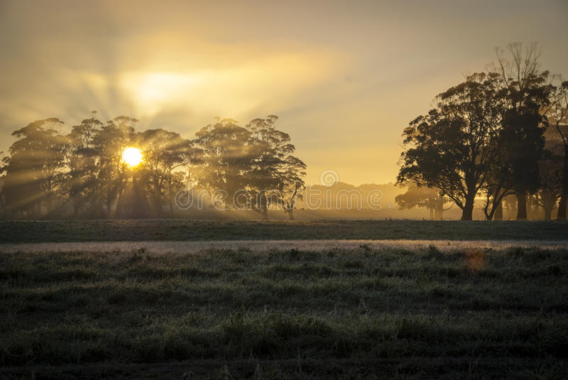 Misty morning. Misty field early morning with the sun just topping the horizon royalty free stock photography
