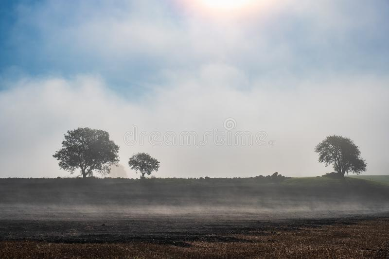 Misty morning on a field with tree silhouettes stock photography