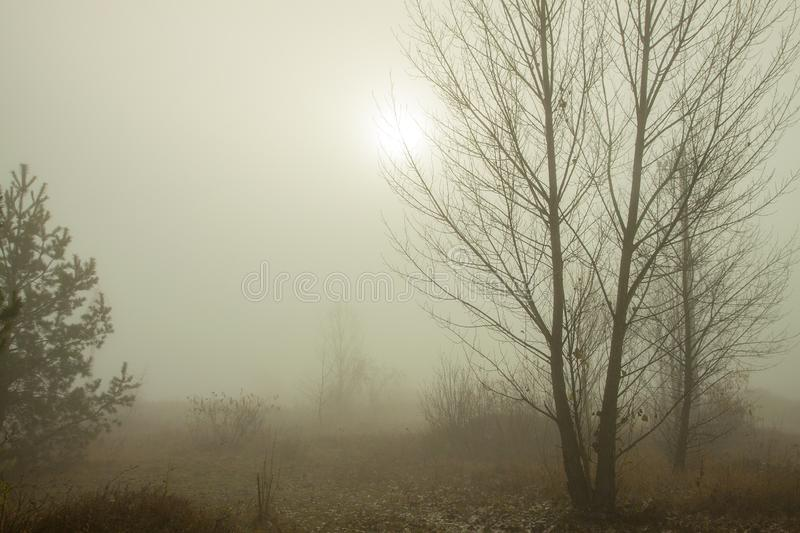 Misty morning on the forest. Beautiful autumn trees on a fog. The trail on a meadow. stock image