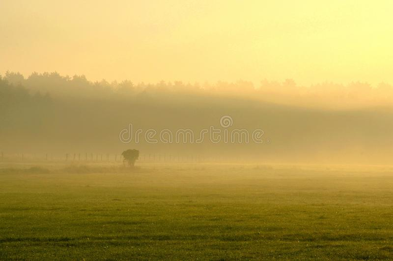 Misty morning on forest field royalty free stock photo