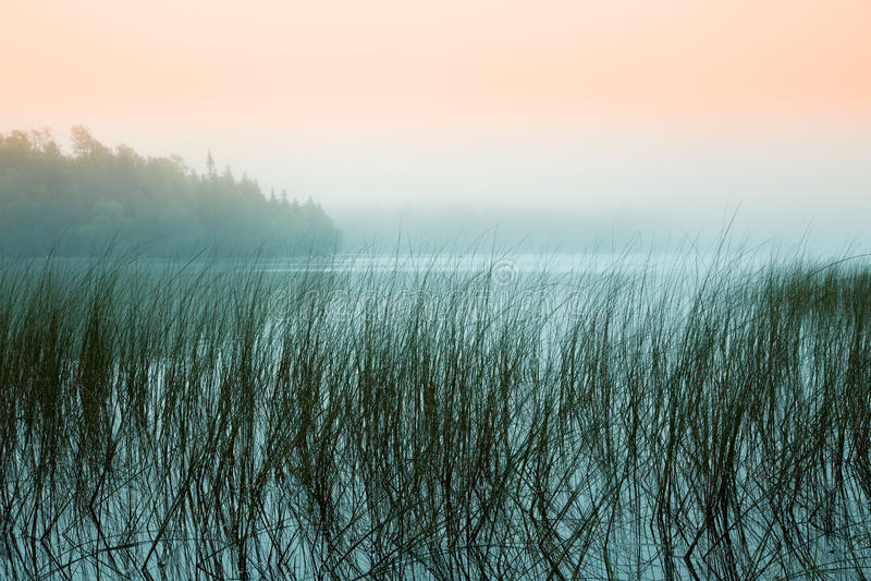 Misty Morning at a Lake royalty free stock image