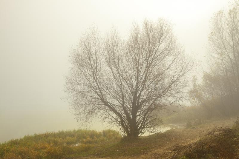 Misty morning on the lake. Trees and grass near water. stock images