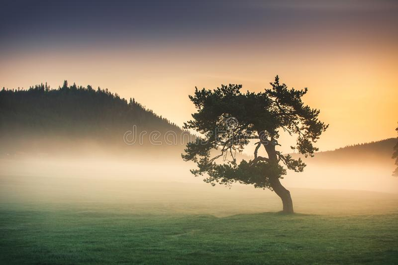 Misty morning with lonely tree in the field royalty free stock images