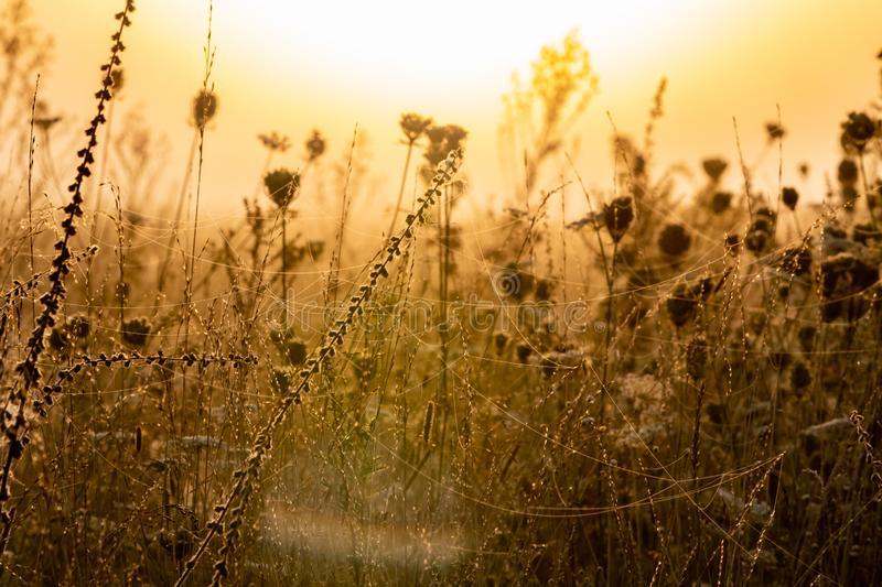 misty morning meadow. Wet grass and cobwebs royalty free stock image