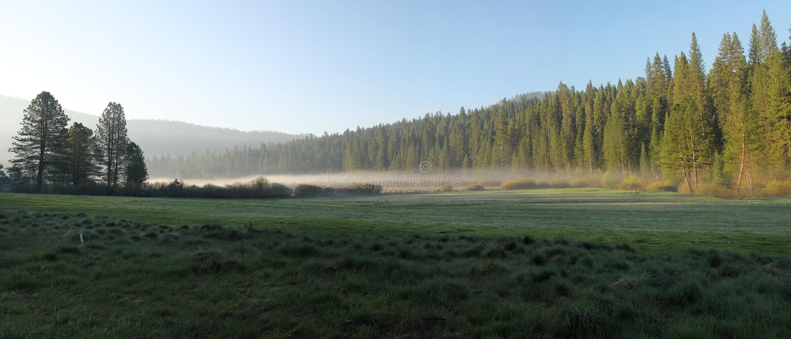 Misty morning. In a meadow at Yosemite national park in California royalty free stock photography