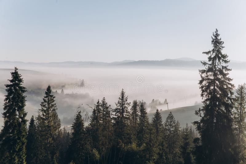 Misty morning in the mountains in summer. Yellow grass, blue spruce, morning fog stock images