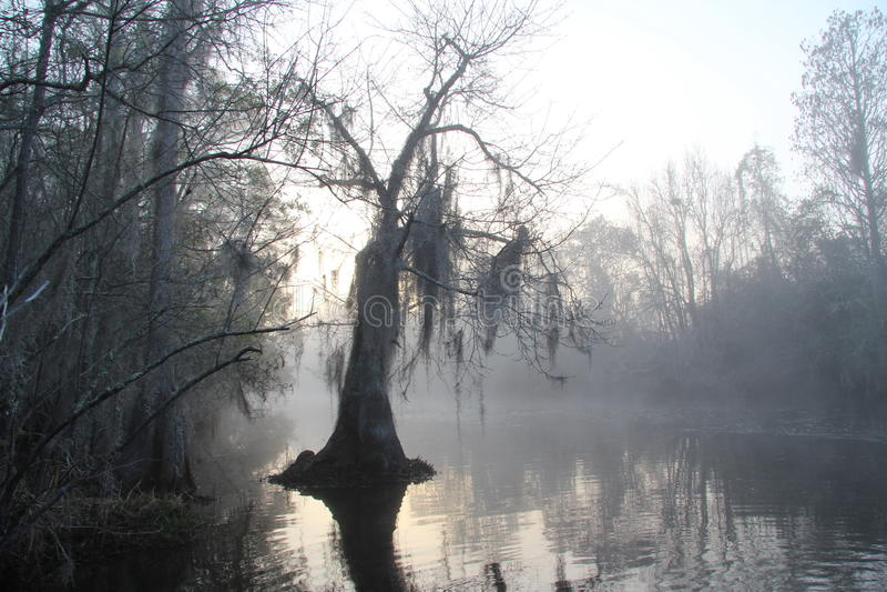 Misty Morning - Okefenokee Swamp - Georgia stock photos