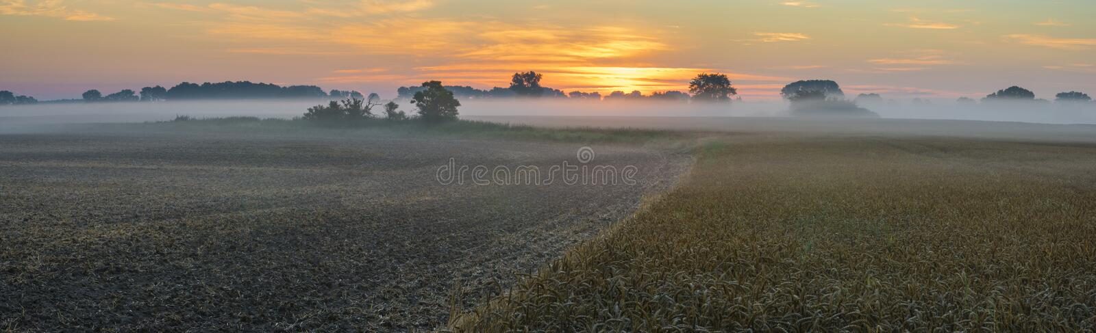 Misty morning over the field of ripe wheat.Late summer on the fields in germany in the morning. Beautiful, colorful sunrise ,Late summer on the fields in germany stock photo