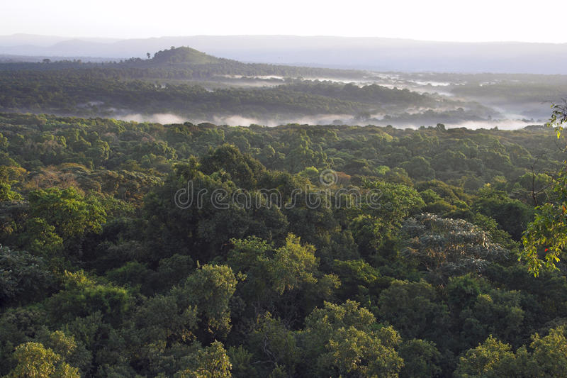 Misty morning over a rainforest. royalty free stock image