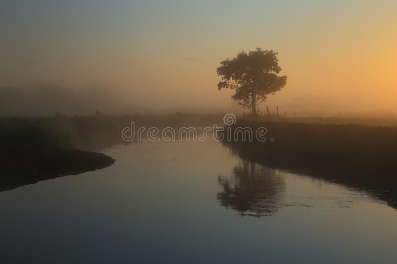 Misty morning over river Axe. Lonely tree on the farmland in Axe Valley, East Devon royalty free stock photos
