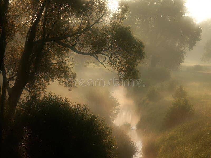 misty morning scenery with autumn trees stock photos