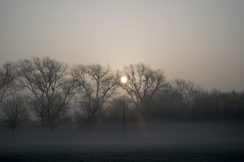 Misty Morning Sunrise photo stock